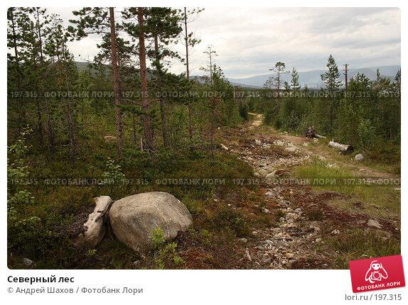 Северный лес, фото № 197315, снято 7 февраля 2006 г. (c) Андрей Шахов / Фотобанк Лори