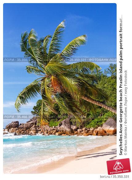 Seychelles Anse Georgette beach Praslin island palm portrait format... Стоковое фото, фотограф Markus Mainka / easy Fotostock / Фотобанк Лори