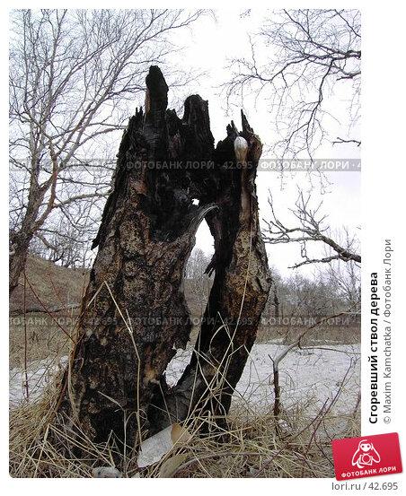 Сгоревший ствол дерева, фото № 42695, снято 12 мая 2007 г. (c) Maxim Kamchatka / Фотобанк Лори
