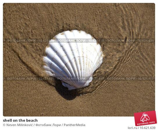 shell on the beach. Стоковое фото, фотограф Neven Milinković / PantherMedia / Фотобанк Лори