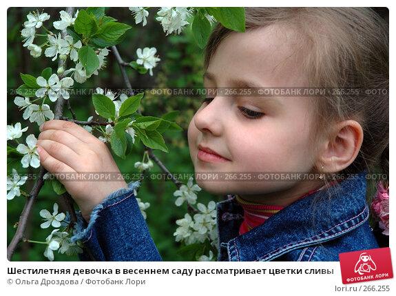 Шестилетняя девочка в весеннем саду рассматривает цветки сливы, фото № 266255, снято 18 мая 2005 г. (c) Ольга Дроздова / Фотобанк Лори