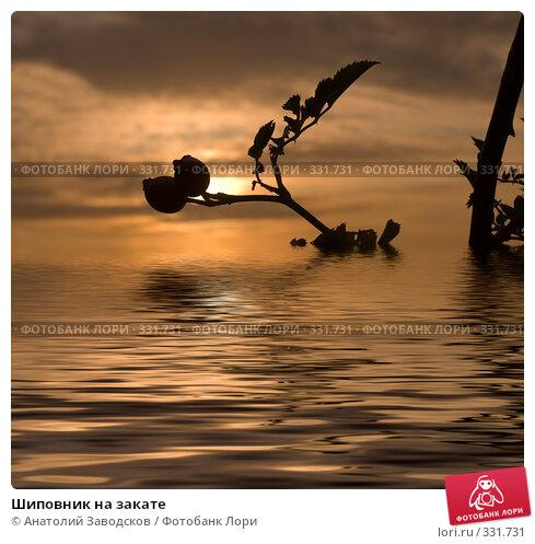 Купить «Шиповник на закате», фото № 331731, снято 28 сентября 2005 г. (c) Анатолий Заводсков / Фотобанк Лори