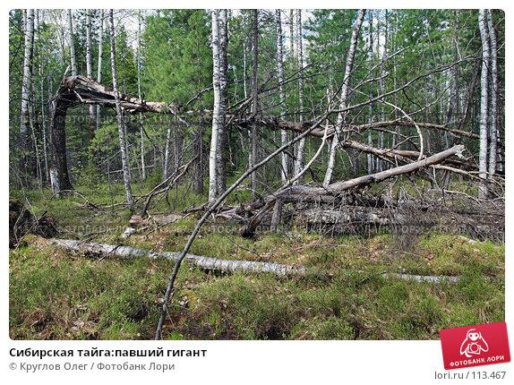 Сибирская тайга:павший гигант, фото № 113467, снято 6 июня 2007 г. (c) Круглов Олег / Фотобанк Лори