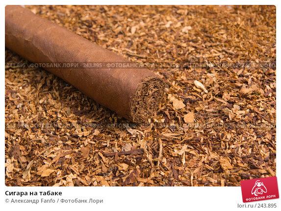 Сигара на табаке, фото № 243895, снято 16 января 2017 г. (c) Александр Fanfo / Фотобанк Лори
