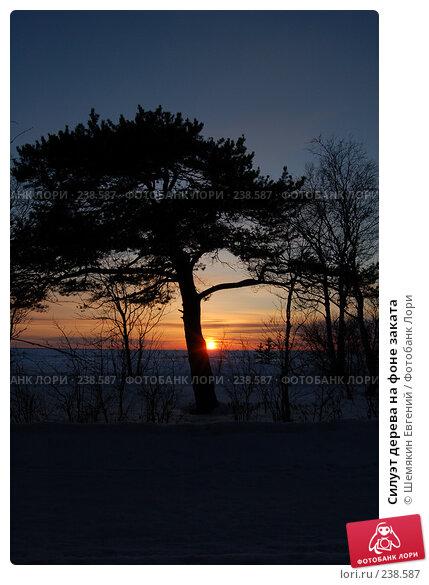 Силуэт дерева на фоне заката, фото № 238587, снято 22 января 2017 г. (c) Шемякин Евгений / Фотобанк Лори