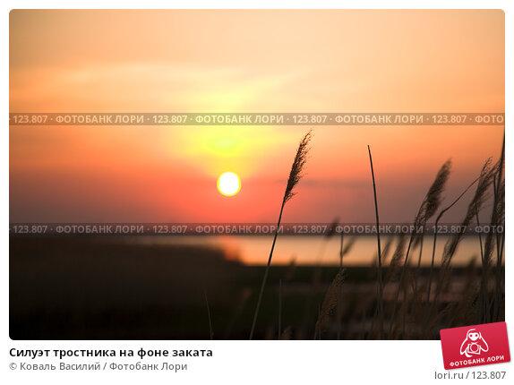 Силуэт тростника на фоне заката, фото № 123807, снято 23 мая 2007 г. (c) Коваль Василий / Фотобанк Лори