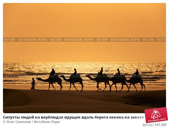 Силуэты людей на верблюдах идущих вдоль берега океана на закате солнца, фото № 167359, снято 1 августа 2007 г. (c) Олег Селезнев / Фотобанк Лори