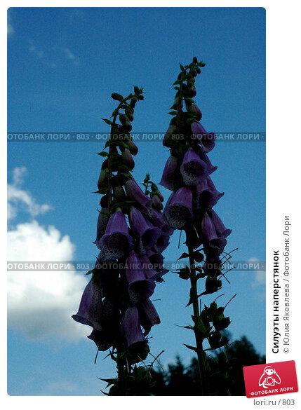Силуэты наперстянок, фото № 803, снято 28 июня 2005 г. (c) Юлия Яковлева / Фотобанк Лори