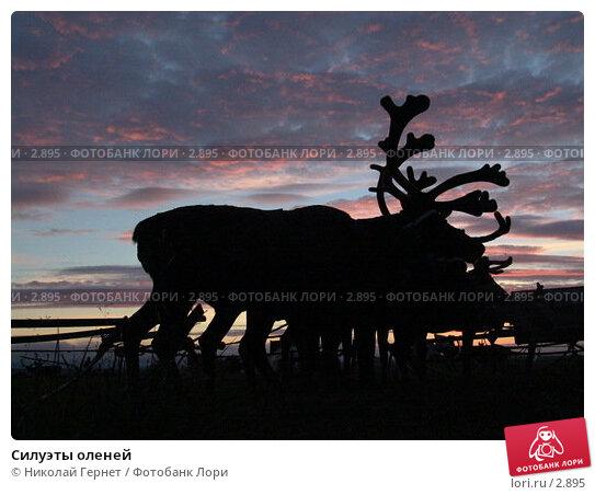 Силуэты оленей, фото № 2895, снято 2 августа 2005 г. (c) Николай Гернет / Фотобанк Лори