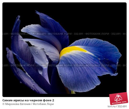 Синие ирисы на черном фоне 2, фото № 332691, снято 23 марта 2017 г. (c) Миронова Евгения / Фотобанк Лори