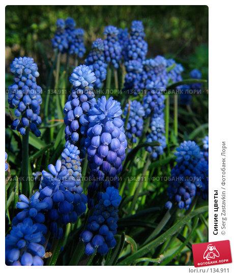 Синие цветы, фото № 134911, снято 20 мая 2005 г. (c) Serg Zastavkin / Фотобанк Лори