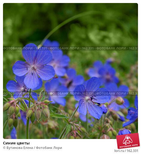 Синие цветы, фото № 162331, снято 30 июня 2007 г. (c) Бутинова Елена / Фотобанк Лори