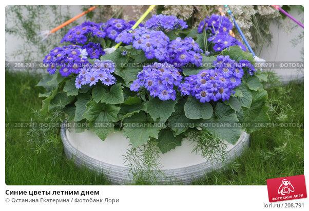 Синие цветы летним днем, фото № 208791, снято 14 февраля 2008 г. (c) Останина Екатерина / Фотобанк Лори