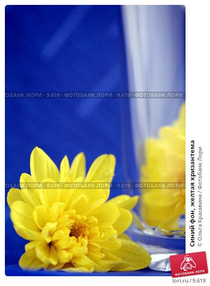 Синий фон, желтая хризантема, фото № 9619, снято 29 июня 2006 г. (c) Ольга Красавина / Фотобанк Лори