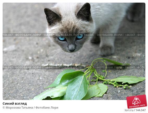 Купить «Синий взгляд», фото № 144047, снято 10 июня 2006 г. (c) Морозова Татьяна / Фотобанк Лори