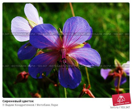 Купить «Сиреневый цветок», фото № 103347, снято 25 апреля 2018 г. (c) Вадим Кондратенков / Фотобанк Лори
