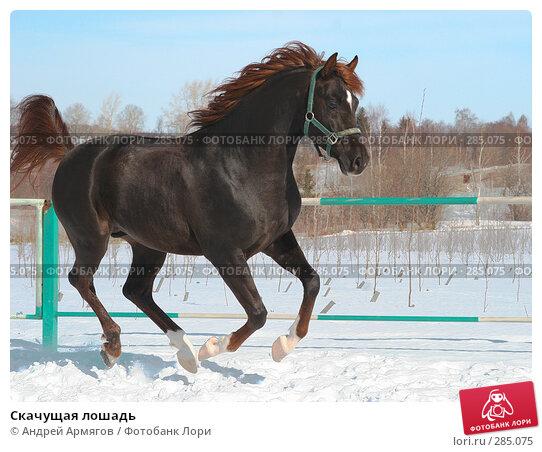 Купить «Скачущая лошадь», фото № 285075, снято 24 марта 2006 г. (c) Андрей Армягов / Фотобанк Лори