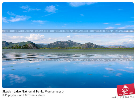 Купить «Skadar Lake National Park, Montenegro», фото № 28292031, снято 28 июня 2015 г. (c) Papoyan Irina / Фотобанк Лори