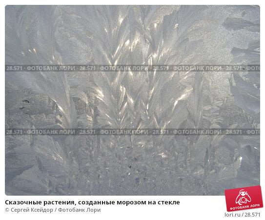 Сказочные растения, созданные морозом на стекле, фото № 28571, снято 27 января 2007 г. (c) Сергей Ксейдор / Фотобанк Лори