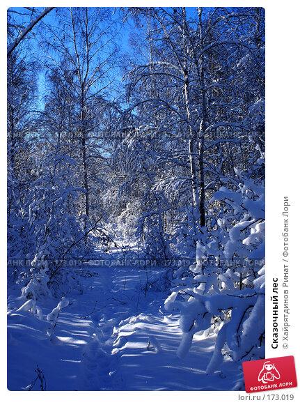 Сказочный лес, фото № 173019, снято 20 ноября 2006 г. (c) Хайрятдинов Ринат / Фотобанк Лори