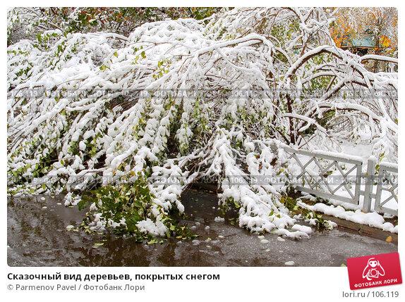 Купить «Сказочный вид деревьев, покрытых снегом», фото № 106119, снято 16 октября 2007 г. (c) Parmenov Pavel / Фотобанк Лори