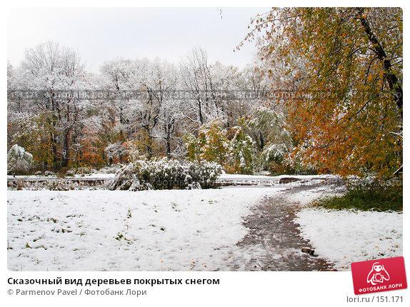 Сказочный вид деревьев покрытых снегом, фото № 151171, снято 16 октября 2007 г. (c) Parmenov Pavel / Фотобанк Лори