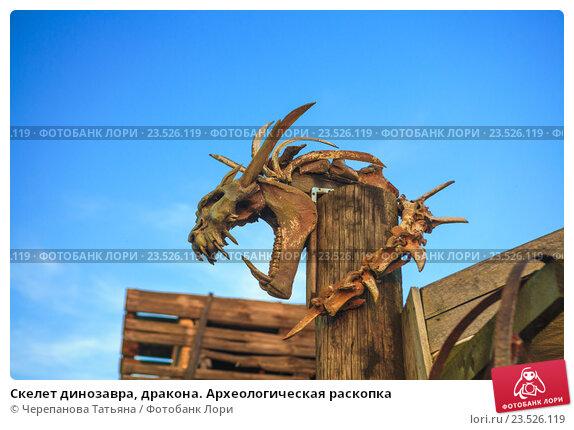 Скелет динозавра, дракона. Археологическая раскопка. Стоковое фото, фотограф Черепанова Татьяна / Фотобанк Лори