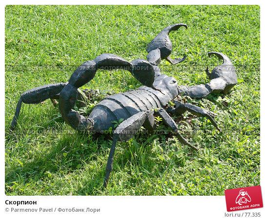 Скорпион, фото № 77335, снято 23 августа 2007 г. (c) Parmenov Pavel / Фотобанк Лори
