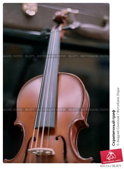 Скрипичный гриф, фото № 36871, снято 29 марта 2017 г. (c) Андрей Соколов / Фотобанк Лори