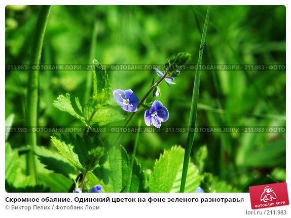 Скромное обаяние. Одинокий цветок на фоне зеленого разнотравья, фото № 211983, снято 7 декабря 2016 г. (c) Виктор Пелих / Фотобанк Лори