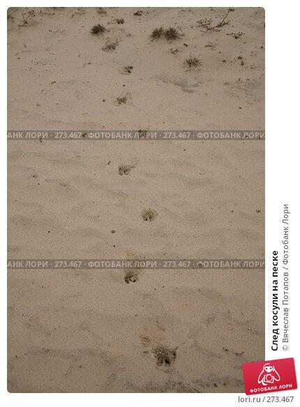 След косули на песке, фото № 273467, снято 21 декабря 2007 г. (c) Вячеслав Потапов / Фотобанк Лори