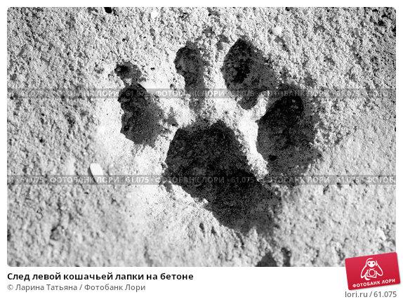 След левой кошачьей лапки на бетоне, фото № 61075, снято 28 июня 2007 г. (c) Ларина Татьяна / Фотобанк Лори