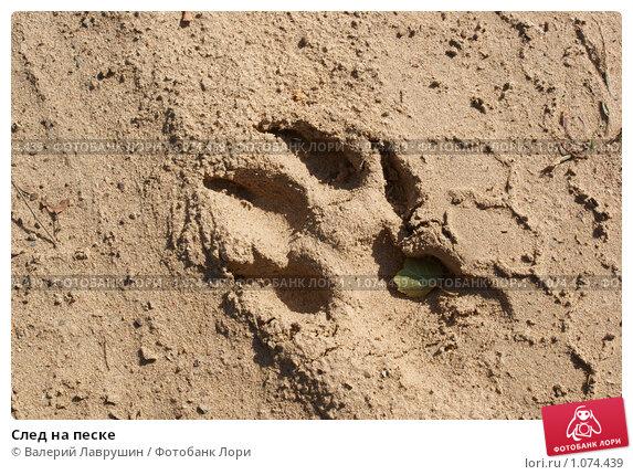 Купить «След на песке», фото № 1074439, снято 6 сентября 2009 г. (c) Валерий Лаврушин / Фотобанк Лори