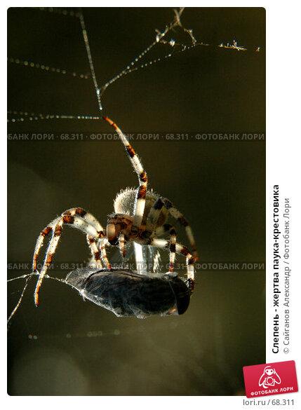 Слепень - жертва паука-крестовика, фото № 68311, снято 29 июля 2007 г. (c) Сайганов Александр / Фотобанк Лори