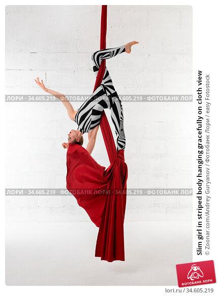 Slim girl in striped body hanging gracefully on cloth view. Стоковое фото, фотограф Zoonar.com/Andrey Guryanov / easy Fotostock / Фотобанк Лори