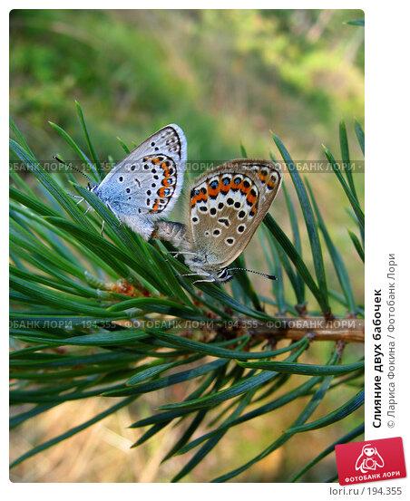 Слияние двух бабочек, фото № 194355, снято 17 июля 2005 г. (c) Лариса Фокина / Фотобанк Лори