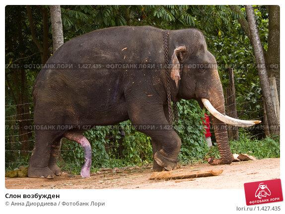 стояк у слона фото качественно
