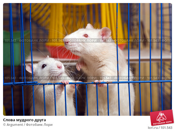 Купить «Слова мудрого друга», фото № 101543, снято 16 сентября 2007 г. (c) Argument / Фотобанк Лори