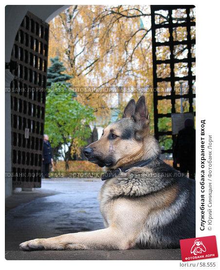 Служебная собака охраняет вход, фото № 58555, снято 21 октября 2004 г. (c) Юрий Синицын / Фотобанк Лори