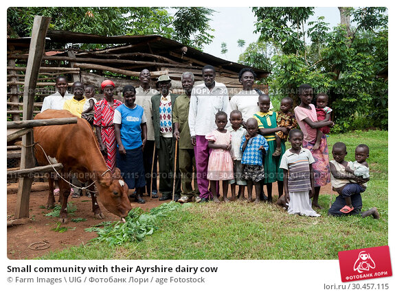 Small community with their Ayrshire dairy cow. Стоковое фото, фотограф Farm Images \ UIG / age Fotostock / Фотобанк Лори