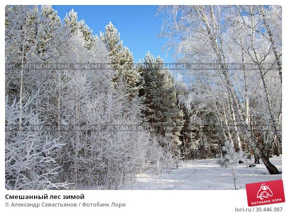 Купить «Смешанный лес зимой», фото № 30446987, снято 20 марта 2019 г. (c) Александр Севастьянов / Фотобанк Лори