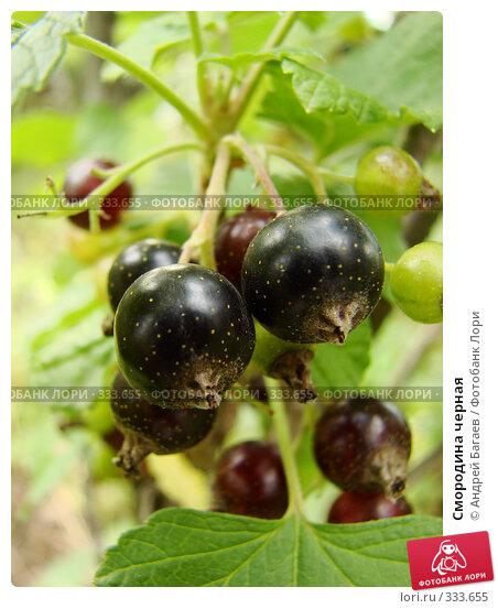 Смородина черная, фото № 333655, снято 13 июня 2008 г. (c) Андрей Багаев / Фотобанк Лори