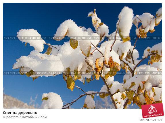 Снег на деревьях, фото № 121171, снято 5 ноября 2007 г. (c) podfoto / Фотобанк Лори