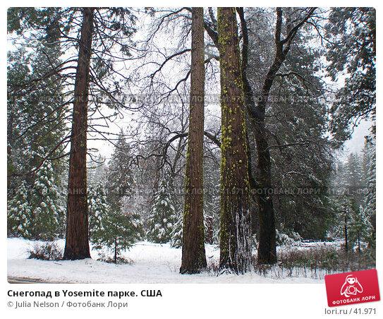 Снегопад в Yosemite парке. США, фото № 41971, снято 26 февраля 2007 г. (c) Julia Nelson / Фотобанк Лори