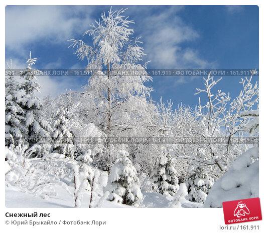 Снежный лес, фото № 161911, снято 3 января 2005 г. (c) Юрий Брыкайло / Фотобанк Лори