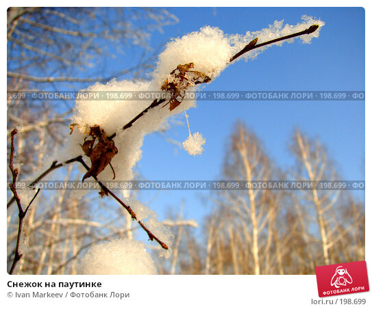 Снежок на паутинке, фото № 198699, снято 3 февраля 2008 г. (c) Василий Каргандюм / Фотобанк Лори