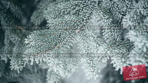 Купить «Snow-covered branch of a pine in winter park. Christmas background», видеоролик № 27058899, снято 5 октября 2017 г. (c) Happy Letters / Фотобанк Лори