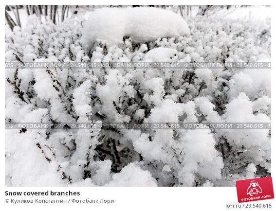 Купить «Snow covered branches», фото № 29540615, снято 22 февраля 2018 г. (c) Куликов Константин / Фотобанк Лори