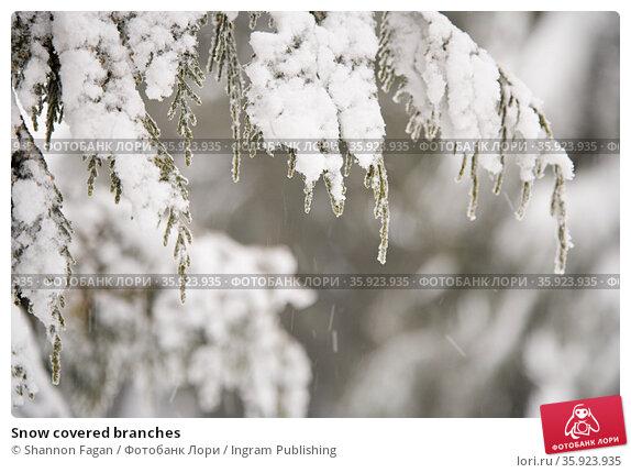 Snow covered branches. Стоковое фото, фотограф Shannon Fagan / Ingram Publishing / Фотобанк Лори