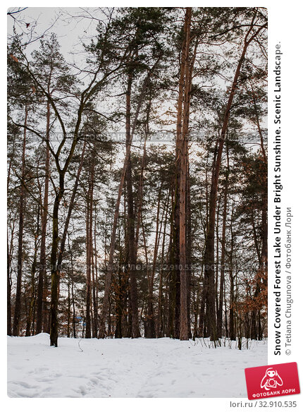 Купить «Snow Covered Forest Lake Under Bright Sunshine. Scenic Landscape.», фото № 32910535, снято 18 января 2019 г. (c) Tetiana Chugunova / Фотобанк Лори